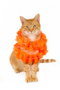 Sitting ginger cat with a boa Royalty Free Stock Photo