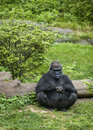 Sitting Gorilla Stock Photos