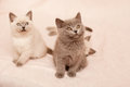 Sitting kittens Royalty Free Stock Photos