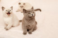Sitting kittens three on pink background Royalty Free Stock Photos