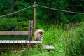 Sitting monkey a at kolmården zoo sweden Stock Photography