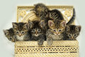 Six adorable kittens in a wicker box Stock Photo