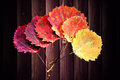 Six autumn aspen leaves Royalty Free Stock Images