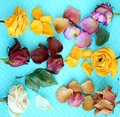 Six colorful dried rose flowers Royalty Free Stock Photo