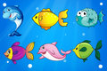 Six different fishes under the sea Stock Photography