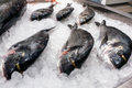 Six fresh-frozen fish Royalty Free Stock Photo