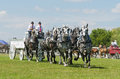 Six horse hitch team of grey percherons at country draft horses fair south mountain fair http southmountainfair ca Stock Photos