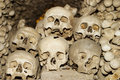 Six Human Skulls Royalty Free Stock Photo