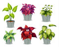 Six non-flowering plants Royalty Free Stock Photos