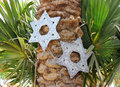 Six pointed stars on a palm tree decorative star star of david as an ornament holiday of independence day of israel Royalty Free Stock Photos
