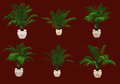 Six Potted Palms 3d CG Royalty Free Stock Photo