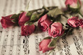 Six red roses on  musical sheet Stock Photo