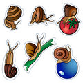 Six slugs Royalty Free Stock Image