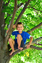Six year old boy climbing  a tree. child up in a tree Royalty Free Stock Photo