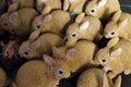 Skärm av modellen rabbits Fotografering för Bildbyråer