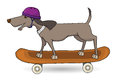 Skateboarding dog with a purple helmet happy Stock Photography