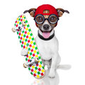 Skater dog with red cap ready to play Stock Image