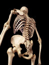 The skeletal back medical accurate illustration of Stock Images