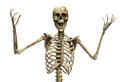 The skeletal scream skelton that is screaming in rage or terror Stock Image