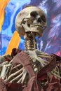 Skeleton at a amusement park ghost train close up view Stock Photography