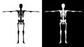 Skeleton black white isolated on and isolated on Stock Photo