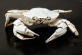 Skeleton of crab on black background Stock Photo