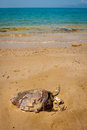 Skeleton of a dead turtle on tropical beach Royalty Free Stock Photo