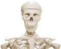 Skeleton Dummy Stock Image