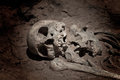 Skeleton human bones grave burial Stock Photography