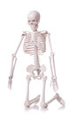 Skeleton isolated on the white Royalty Free Stock Images