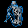 Skeleton of the man back view Royalty Free Stock Photo