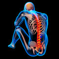 Skeleton of the man with backbone Royalty Free Stock Photo