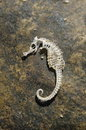Skeleton of a sea horse Royalty Free Stock Photo