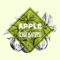 Sketch of apple Royalty Free Stock Photo