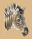 Sketch of a baby zebra s face black and white vector line drawing Royalty Free Stock Images