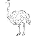Sketch big ostrich standing on a white background. Vector illustration