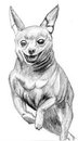 Sketch dog miniature pinscher by pen on paper Stock Image