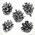 Sketch drawing pine cones on white background Royalty Free Stock Images