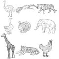 Sketch elephant, tiger, eagle, rooster, giraffe, ostrich, turkey, goose. chicken on a white background. Vector Royalty Free Stock Photo