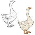 Sketch grey goose on a white background. Vector illustration.