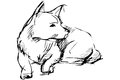 Sketch of home animal dog that lies Royalty Free Stock Photo