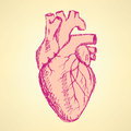Sketch human heart in vintage style Royalty Free Stock Photo