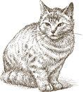 Sketch of a kitten vector drawing little sitting cat Royalty Free Stock Photography