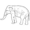 Sketch a large African elephant on white background. Vector illustration Royalty Free Stock Photo