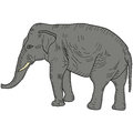 Sketch large African elephant on a white background. Vector illustration Royalty Free Stock Photo