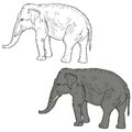 Sketch a large African elephant on a white background. Vector illustration Royalty Free Stock Photo