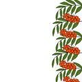 Sketch rowan branch, liner, in color, border