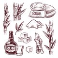 Sketch sugar cane. Sugarcane sweet leaf, sugar plant stalks, rum drink glass and bottle. Sugar manufacturing hand drawn