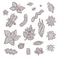 Sketch vector graphic collection of stylized floral and animal elements. Patterned insects, flowers and leaves on a Royalty Free Stock Photo