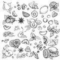 Sketch Vector set of different hand drawn fruit.
